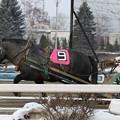 写真: ハクウンリュー レース(18/01/20・3R)