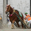 Photos: キンプク レース(18/06/17・3R)
