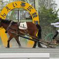 写真: メムロボブサップ  レース(18/06/17・4R)