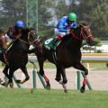 タイセイドリーム レース(18/08/25・第20回 新潟ジャンプステークス)