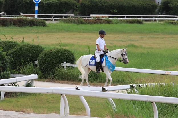 誘導馬 ウイニー_1(18/08/16・笠松競馬場)