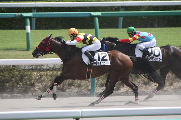 アカネバローロ レース(18/09/08・4R)