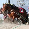 Photos: タケサンツヨイゾ レース(18/06/16・4R)