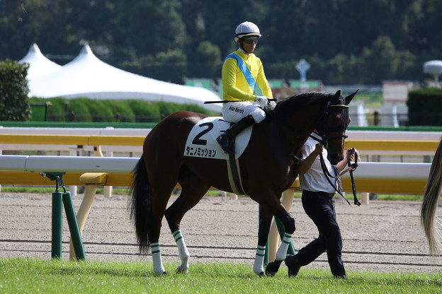 タニノミッション 馬場入場(18/10/20・新馬戦)