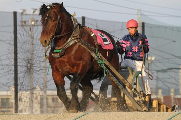 イワフネチャタ レース(18/03/03・7R)