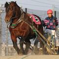 写真: イワフネチャタ レース(18/03/03・7R)