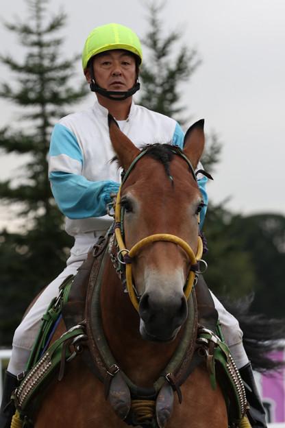 ヒメトラクイーン パドック(18/09/16・報知新聞社杯 第31回 いちい賞・帯広競馬場)