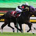 ファンタジスト レース(18/11/03・第54回 京王杯2歳ステークス)