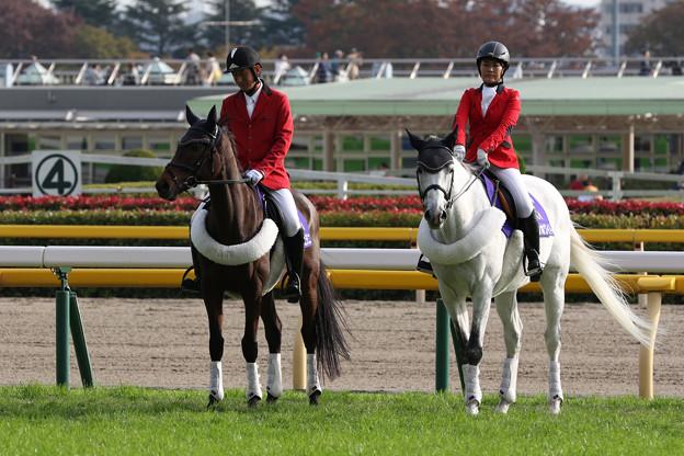 東京競馬場 誘導馬_5(18/11/11)