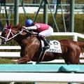 ハウリング レース(18/03/10・2R)