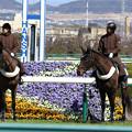 阪神競馬場 誘導馬_2(18/03/10)