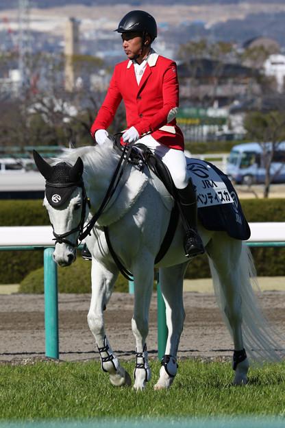 阪神競馬場 誘導馬・ベンティスカ_5(18/03/10)