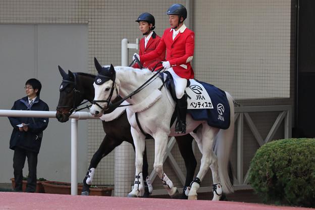 阪神競馬場 誘導馬_7(18/03/10)