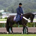 福島競馬場 誘導馬_2(18/07/07)