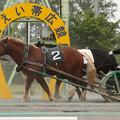 ヤマノセイウン レース(18/06/17・3R)
