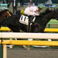 ブラックジョー レース(18/11/10・12R)