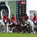 東京競馬場 誘導馬_11(18/11/10)