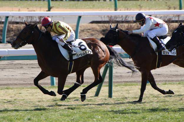 ハーレムライン レース(18/01/07・5R)