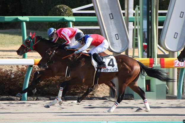 スリラーインマニラ レース(18/01/07・7R)