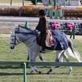 中山競馬場 誘導馬_4(18/01/07)