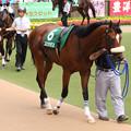ユビキタス パドック(08/06/07・第13回 ユニコーンステークス)