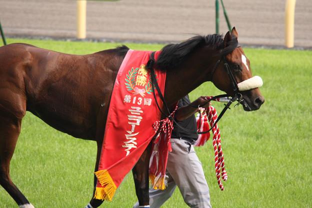 ユビキタス(08/06/07・第13回 ユニコーンステークス)