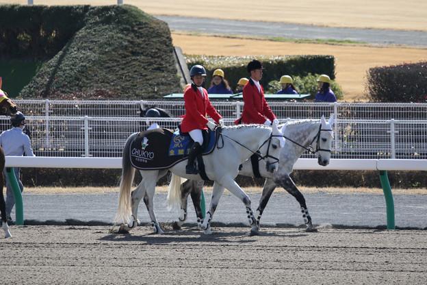 中京競馬場 誘導馬_2(18/03/11)