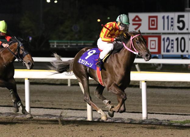 ヒカリオーソ レース_1(18/11/07・第64回 平和賞)
