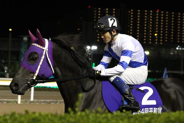 ファーストメロディ 馬場入場(18/11/07・第64回 平和賞)