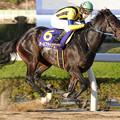 オールブラッシュ レース(18/11/23・第39回 浦和記念)