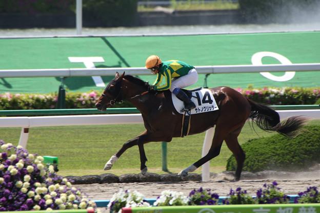 サトノグリッター  レース(18/05/05・2R)