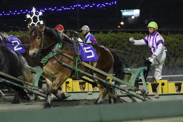 メムロボブサップ レース(18/12/02・第37回 十勝産駒特別)