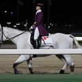 大井競馬場 誘導馬_2(18/12/05・第10回 勝島王冠)