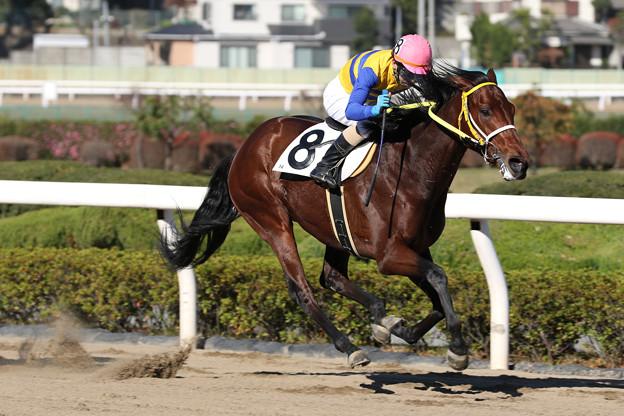 ヨドノロード レース(18/11/23・5R)