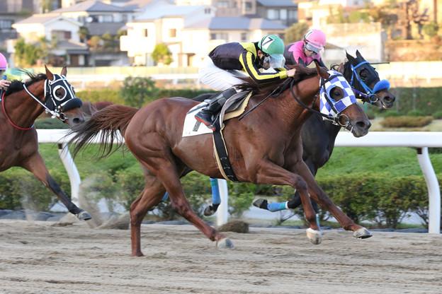 スパーキードリーム レース(18/11/23・埼玉県畜産会長賞特別)