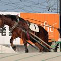 サンサンテルヒメ レース(18/12/02・1R)