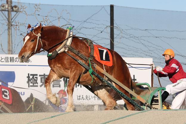 ユメチオ レース(18/12/02・1R)