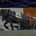 イズミクィーン レース(18/12/02・7R)
