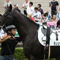 Photos: ダノンキングリー  パドック(18/10/08・新馬戦))