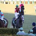 ウインブライト レース後(19/01/05・第68回 日刊スポーツ賞 中山金杯)