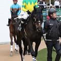 Photos: ゼンノトライブ パドック(19/01/12・中山新春ジャンプステークス)