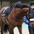 ディキシーナイト パドック(19/01/26・クロッカスステークス)