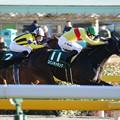 コパノキッキング レース(19/01/27・第33回 根岸ステークス)