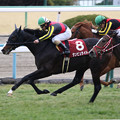 ダンビュライト レース(19/02/10・第112回 京都記念)