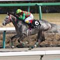 Photos: トラスト レース(19/02/23・春麗ジャンプステークス)