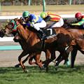 Photos: エメラルエナジー レース(19/02/23・アクアマリンステークス)