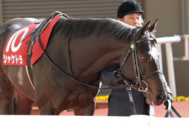 シャケトラ パドック(19/03/17・第67回 阪神大賞典)
