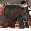 Photos: シャケトラ パドック(19/03/17・第67回 阪神大賞典)