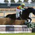 Photos: キングジョーカ レース(19/03/16・4R)