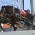 Photos: プレザントウェー レース(19/02/03・8R)